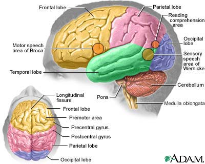 picture of the brain & altheimer's